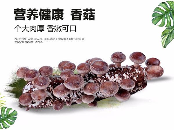 山東七河生物科技股份有限公司產品